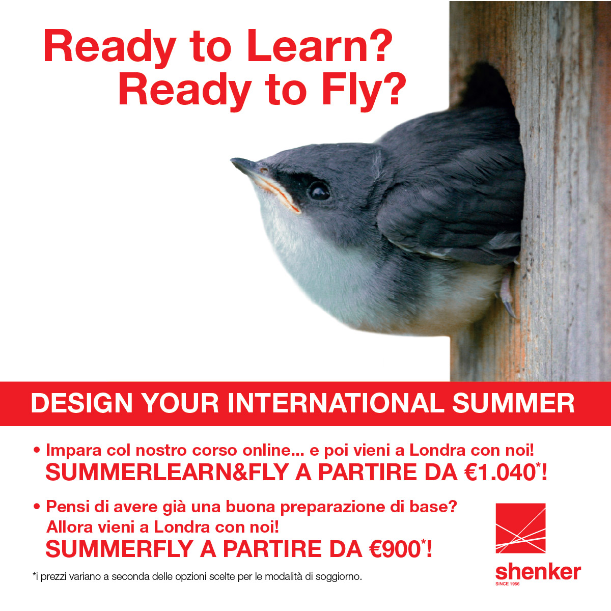 Summer learn and fly
